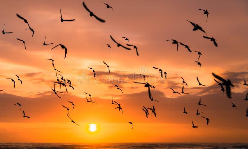 Magische zonsopgang - Durban, Zuid-Afrika stock foto's