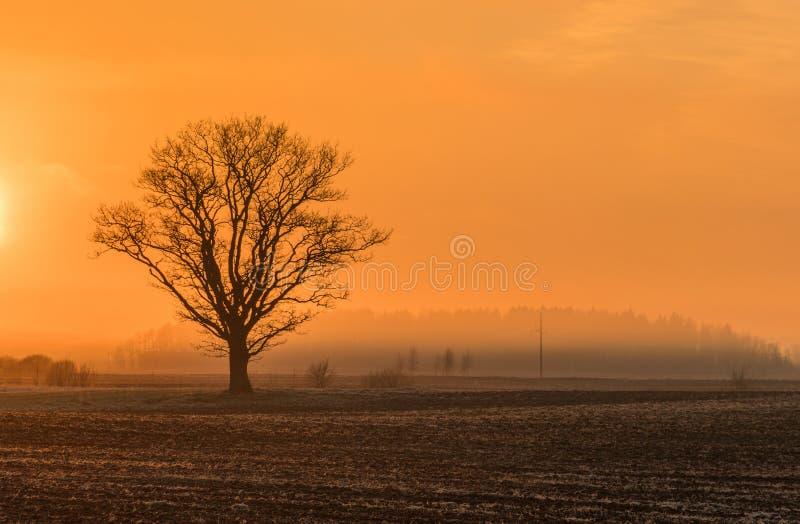 Magische zonsopgang met boom royalty-vrije stock afbeelding