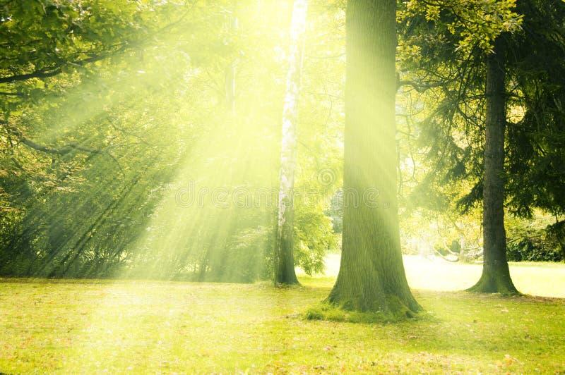Magischer Baum lizenzfreie stockfotos
