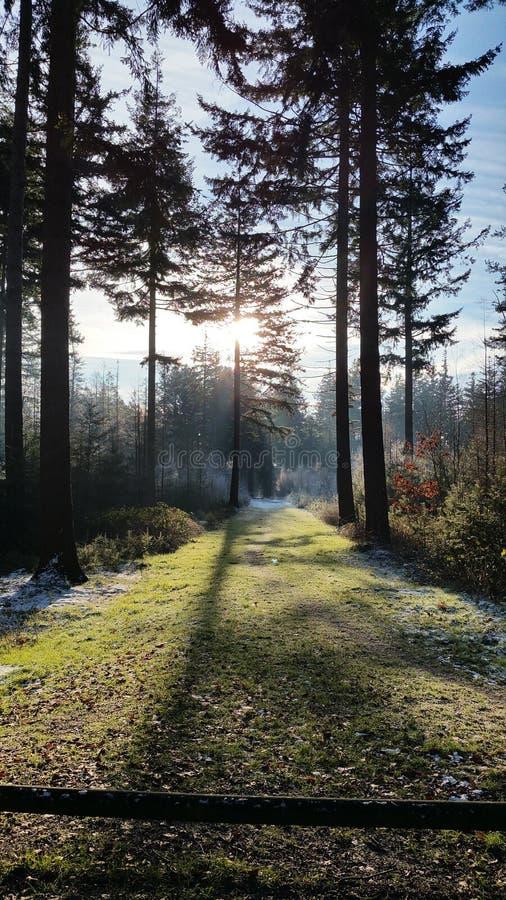 Magischer eisiger Winterwald stockbild