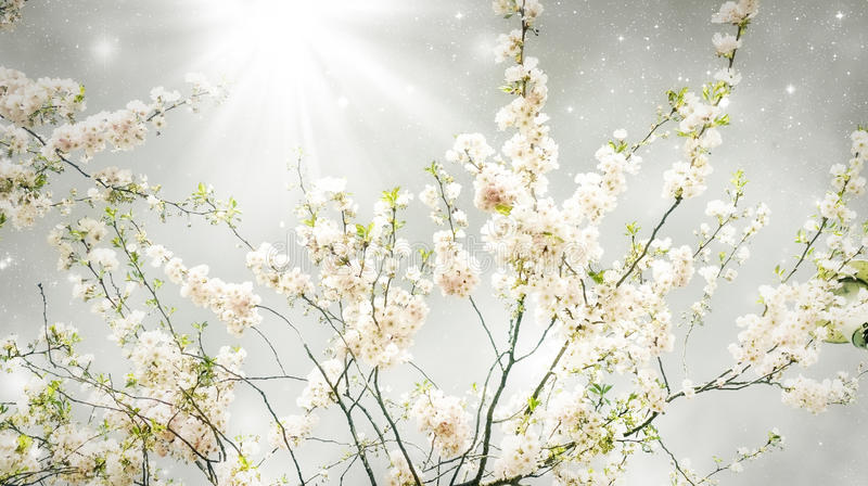 Magischer Frühling lizenzfreie stockfotos