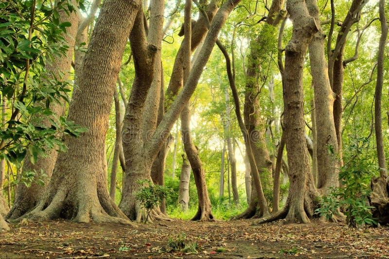 Magischer grüner Wald stockfoto