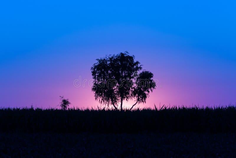 Magischer magentarot-purpurrot-blauer Sonnenaufgang mit einem einzelnen Baum in Serbien stockbilder