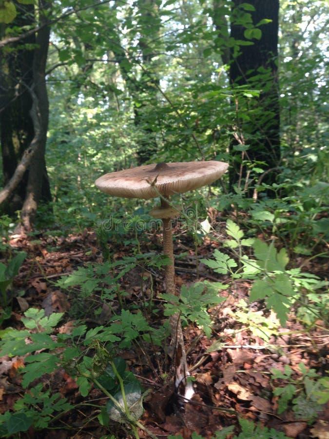 Magischer Pilz lizenzfreie stockbilder