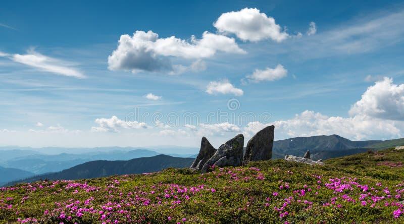 Magischer rosa Rhododendron lizenzfreies stockfoto
