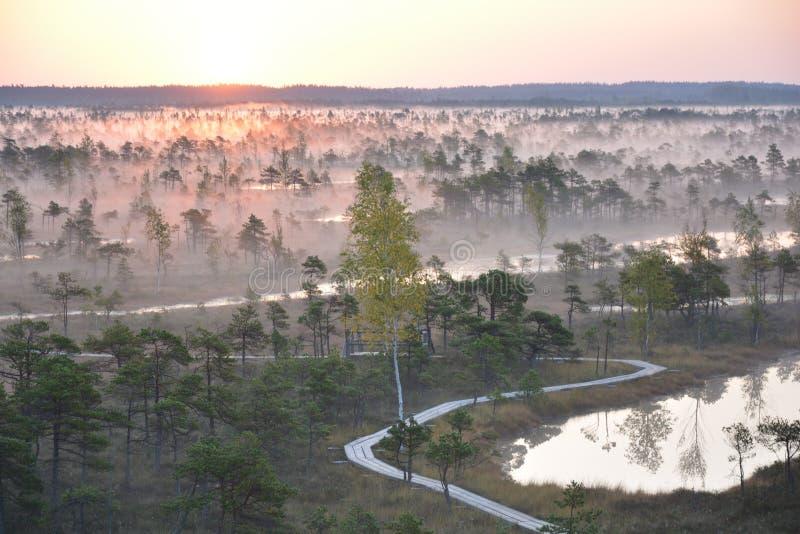 Magischer Sonnenaufgang im Sumpf Kemeri Lettland lizenzfreie stockfotografie