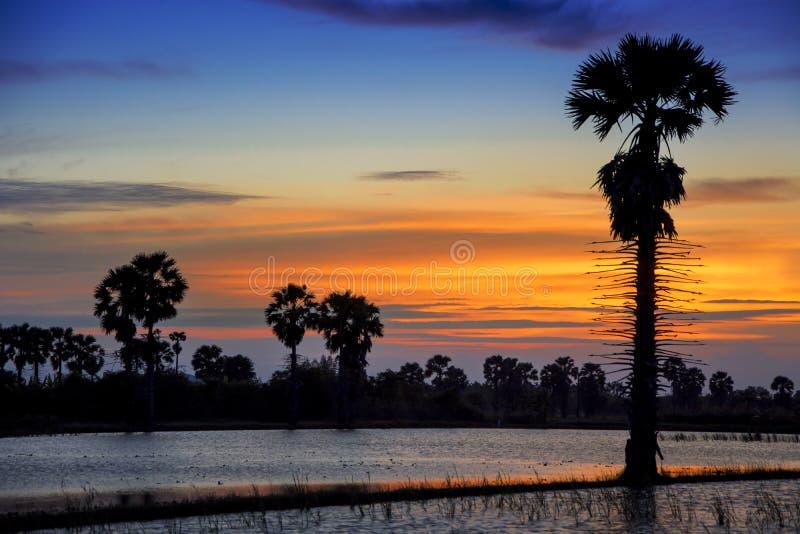 Magischer Sonnenaufgang mit Baum stockbild