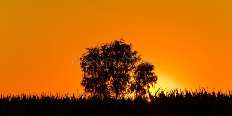 Magischer Sonnenaufgang mit einem einzelnen Baum in Serbien lizenzfreies stockfoto
