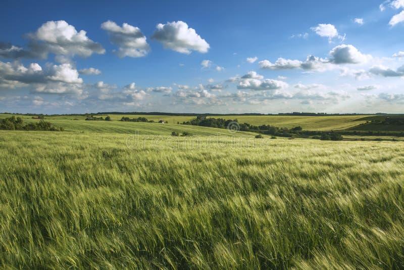 Magischer Sonnenuntergang über dem Weizenfeld lizenzfreie stockfotos