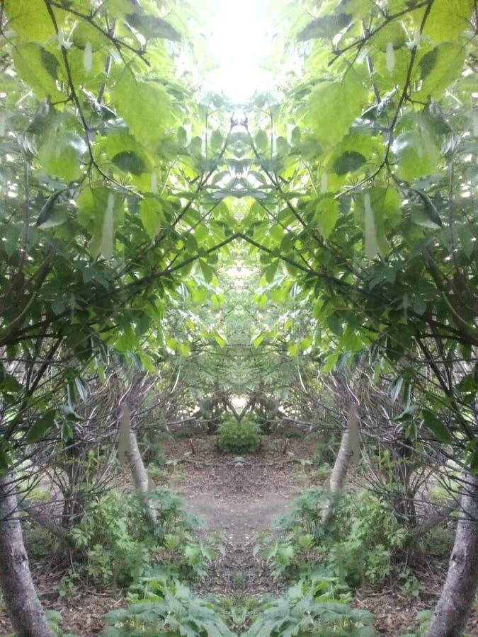 Magischer Wald stockfoto