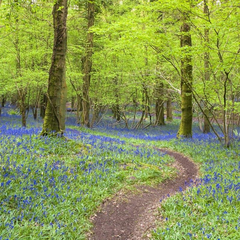 Magischer Wald und wilde Glockenblumeblumen lizenzfreies stockfoto