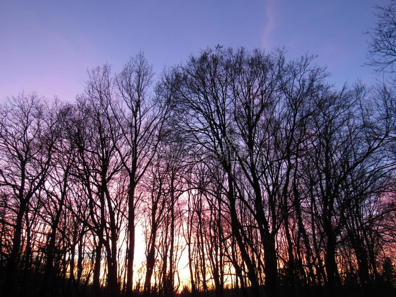 Magischer Waldsonnenuntergang stockbild