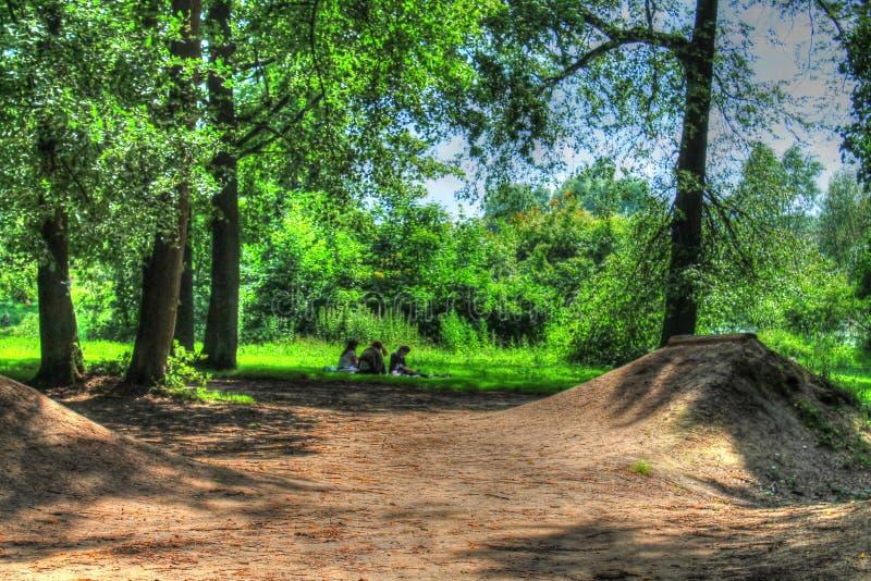 Magischer wilder Wald lizenzfreies stockfoto