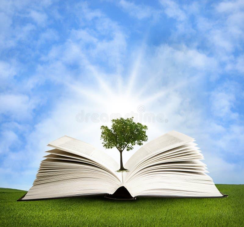 Magisches Buch mit grünem Baum stockbild