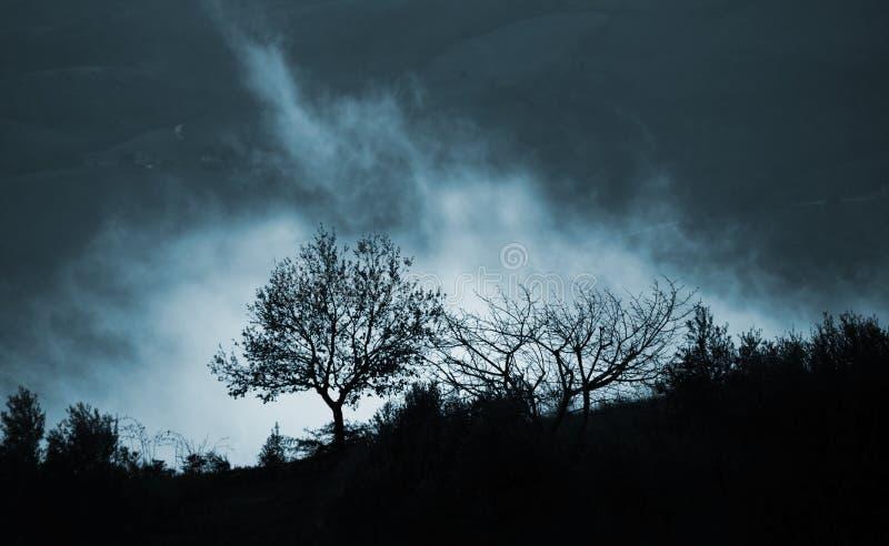Magisk dimma och träd royaltyfri fotografi