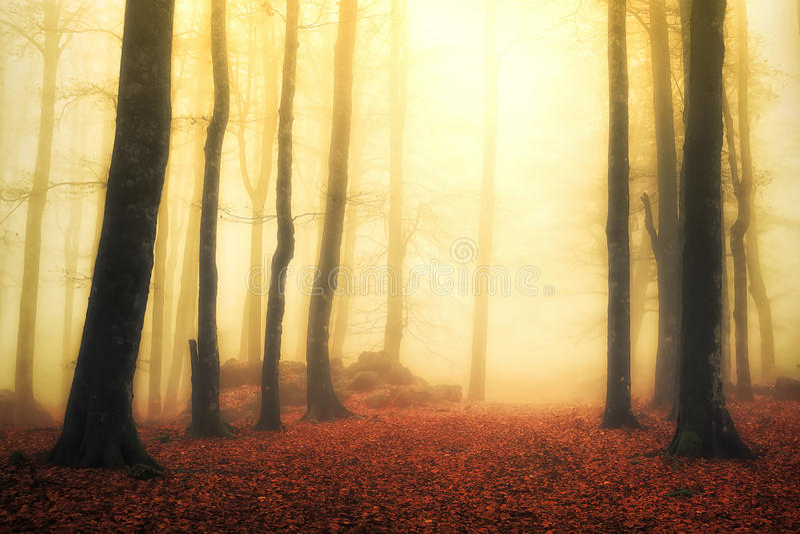 Magisk dimmig skog med solstrålar royaltyfri foto