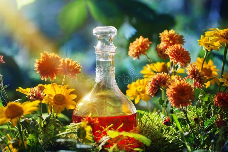 Magisk dryck i flaska i skog royaltyfri bild