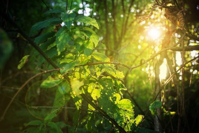 Magisk gräsplan lämnar solen kysst av solnedgången royaltyfri bild