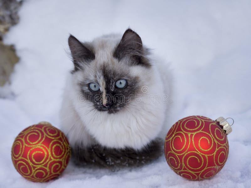 Magisk katt med den röda julbollen fotografering för bildbyråer