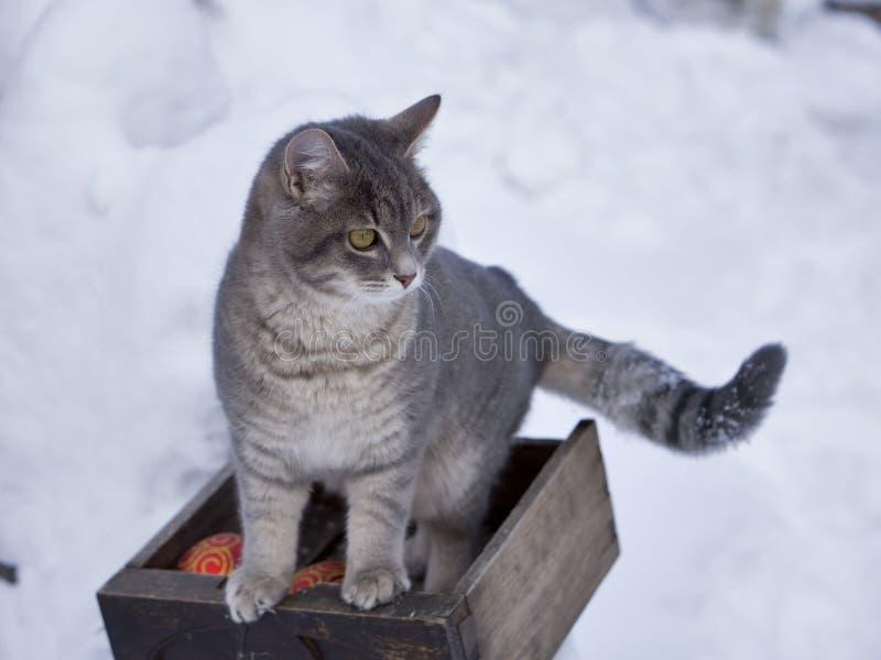 Magisk katt med den röda julbollen arkivfoton