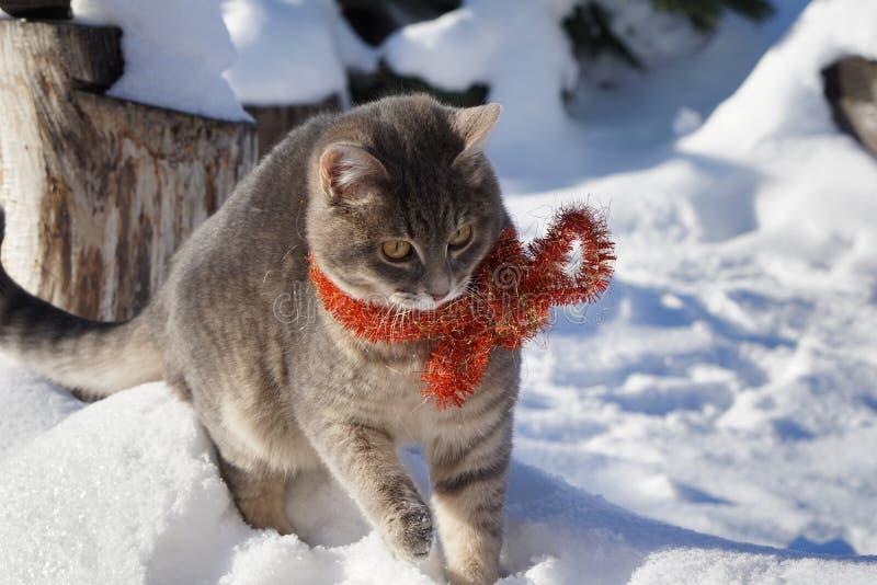 Magisk katt med röda julpärlor royaltyfri fotografi