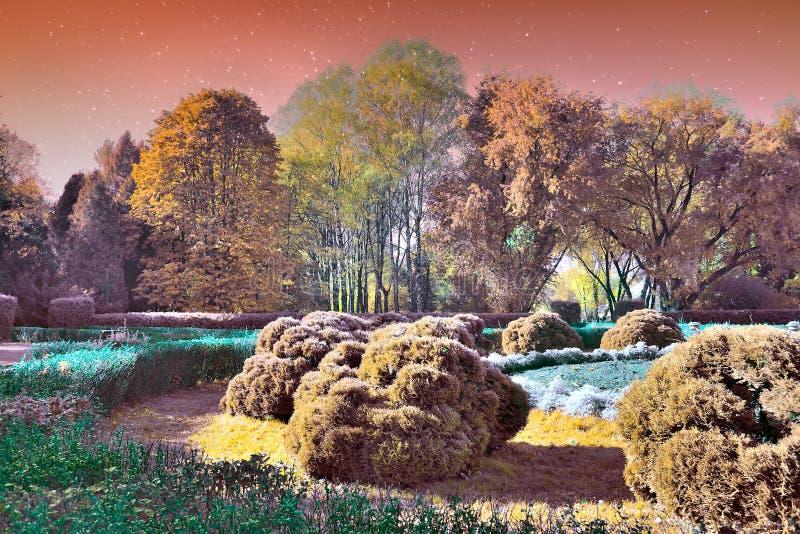 Magisk liggandeträdgård arkivfoto