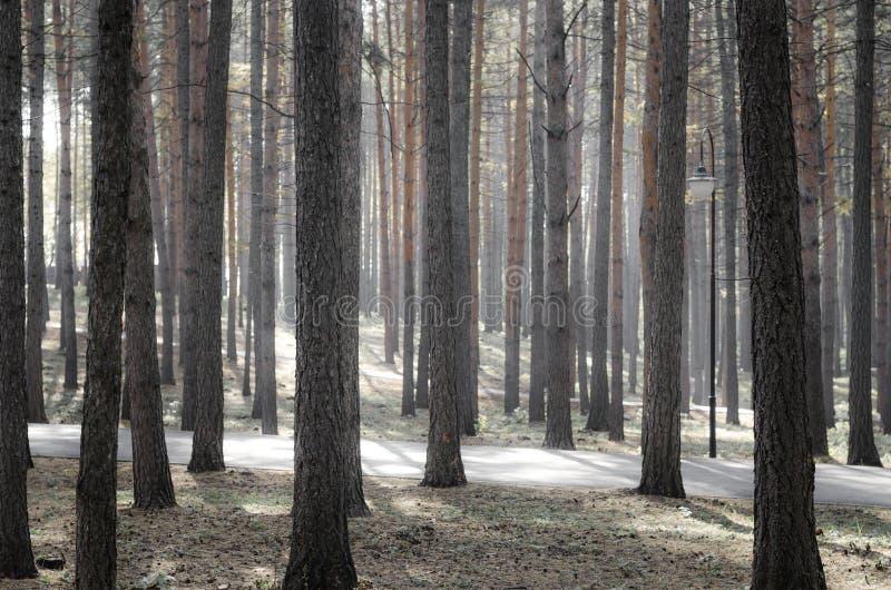 Magisk morgon i skogen royaltyfria bilder