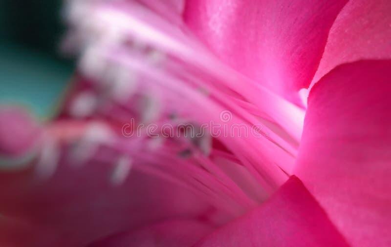 Magisk rosa färgblomma fotografering för bildbyråer