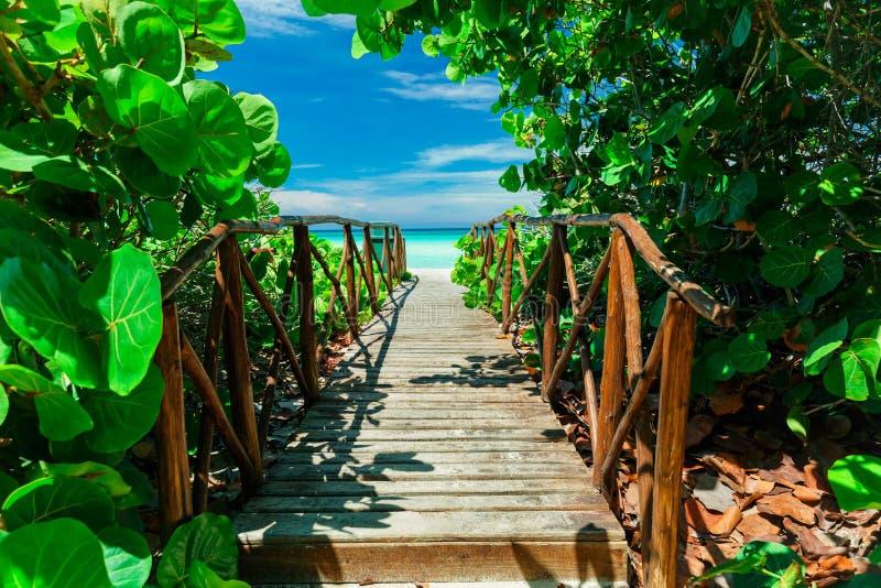 magisk sikt av den gamla träbron som går till och med tropisk trädgård till stranden och det stillsamma havet royaltyfri foto