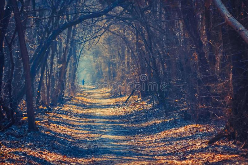 Magisk skog royaltyfri foto