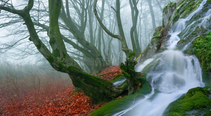 Magisk skog fotografering för bildbyråer