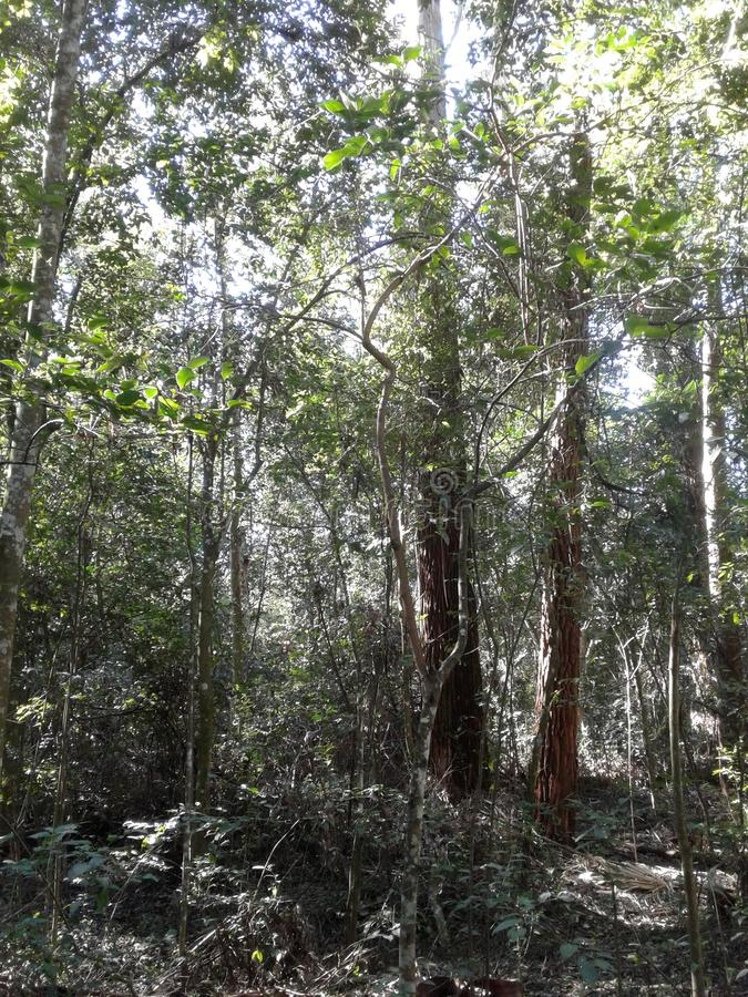 Magisk skog arkivbilder