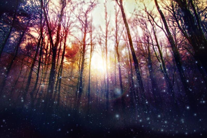 Magisk skog, förtrollade träd, bakbelyst sol royaltyfria foton