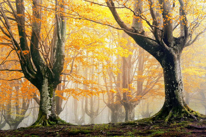 Magisk skog i höst royaltyfri bild