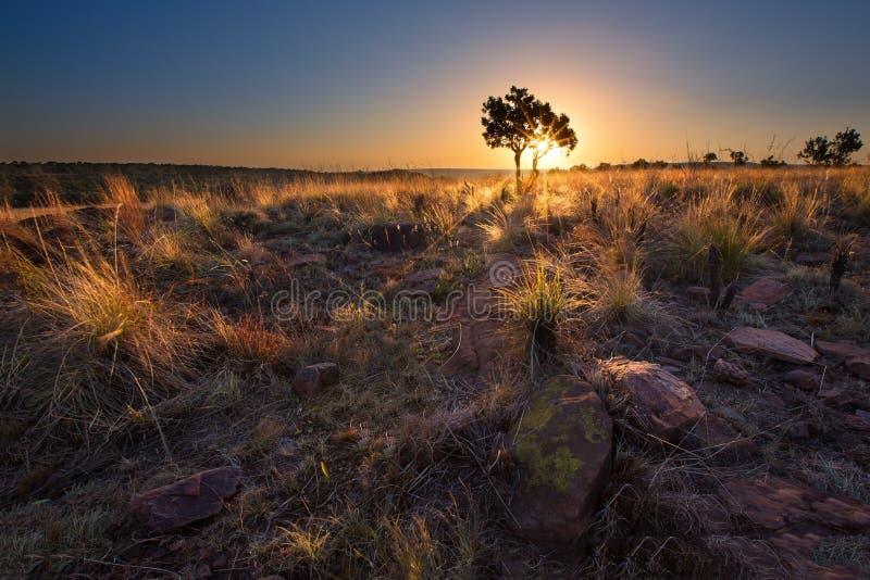 Magisk solnedgång i Afrika med ett ensamt träd på en kulle och louds arkivbild