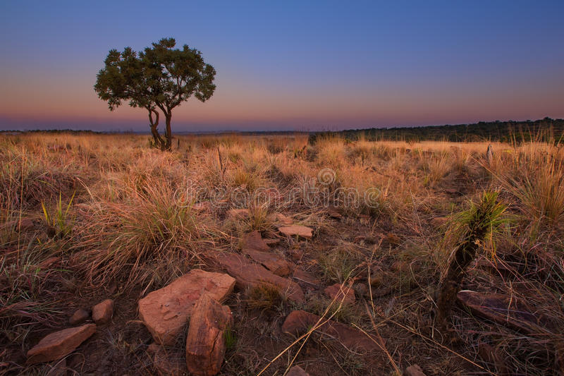 Magisk solnedgång i Afrika med ett ensamt träd på en kulle och louds fotografering för bildbyråer