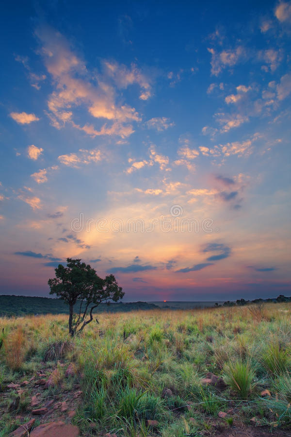 Magisk solnedgång i Afrika med ett ensamt träd på en kulle och louds royaltyfria bilder