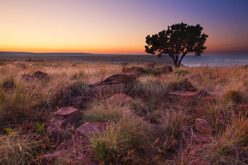 Magisk solnedgång i Afrika med ett ensamt träd på kullen och inga moln royaltyfria foton