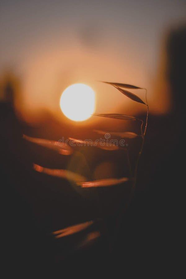 Magisk solnedgång i natur arkivfoto