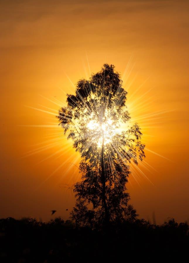 Magisk solnedgång med trädet arkivfoto
