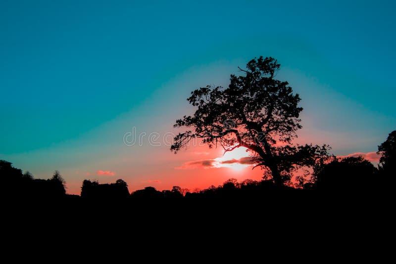 Magisk tropisk solnedgång Trädkontur på den romantiska afrikanen sav royaltyfri fotografi
