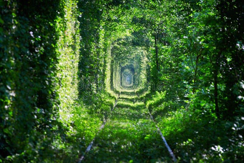 Magisk tunnel av förälskelse, gröna träd och järnvägen royaltyfri bild