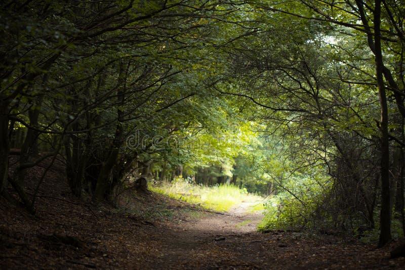 Magisk tunnel i skog arkivbild