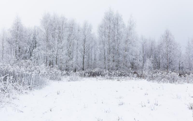 Magisk vit fryst vinter i skogen Litauen, Eu royaltyfria bilder