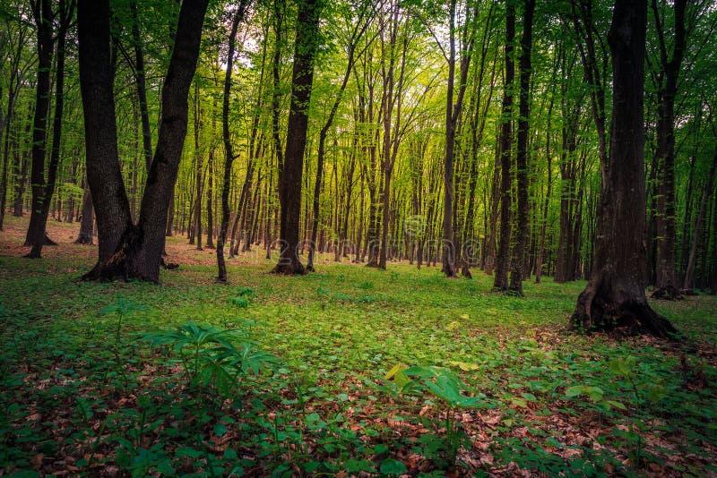 Magiska skogarlandskap royaltyfri fotografi