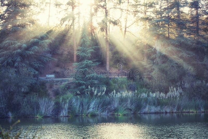 Magiskt bygdlandskap: Franklin Canyon sjön fyllde med guld- solljus, Beverly Hills, Kalifornien royaltyfria bilder