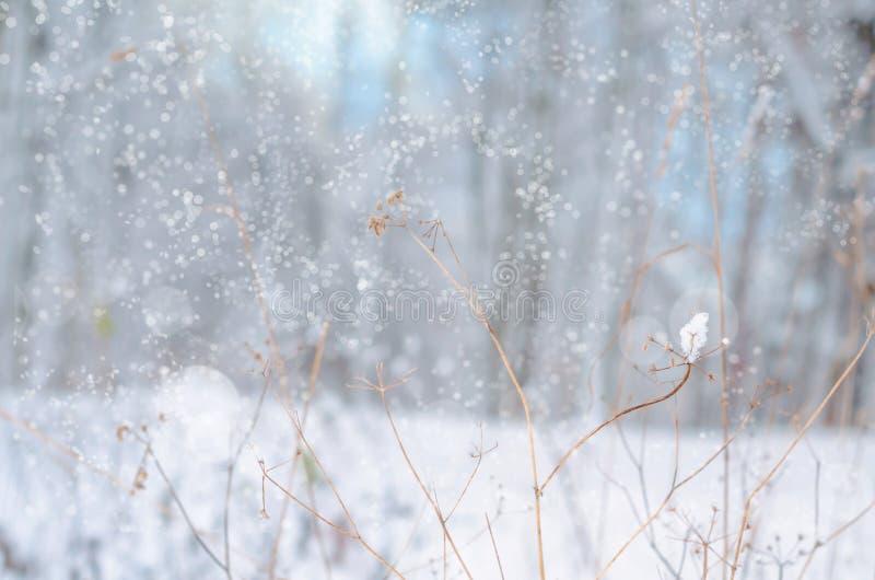 Magiskt landskap för vinternatursnö royaltyfria bilder