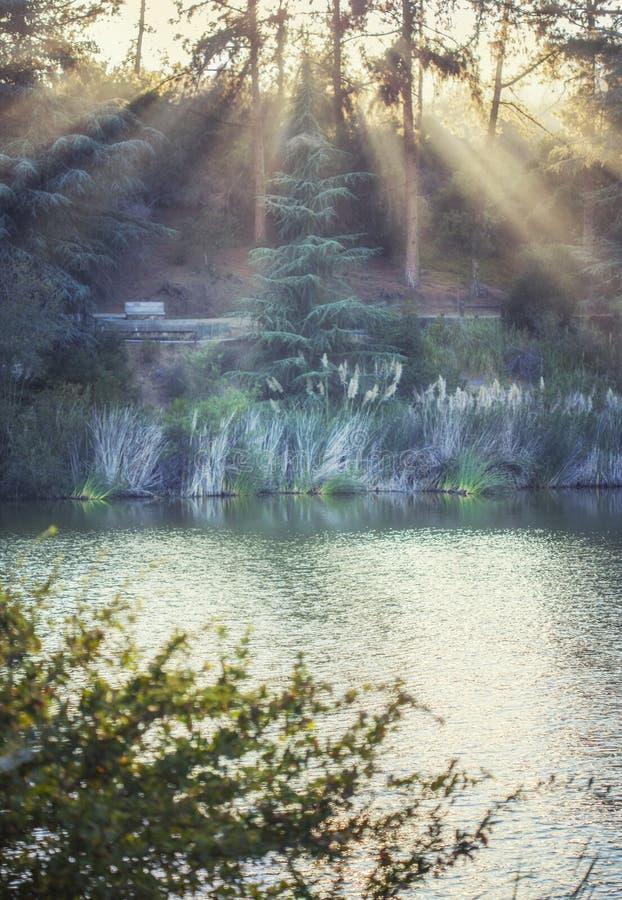 Magiskt naturlandskap: Franklin Canyon sjön fyllde med guld- solljus, Beverly Hills, Kalifornien royaltyfria foton