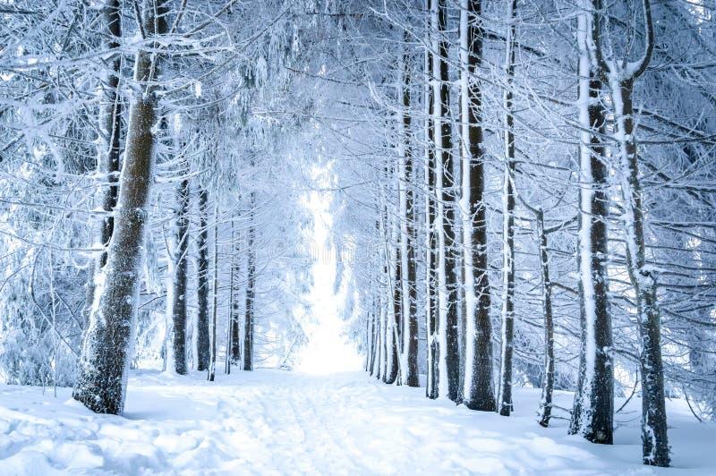 Magiskt vinterlandskap: bana i den snöig skogen arkivbild