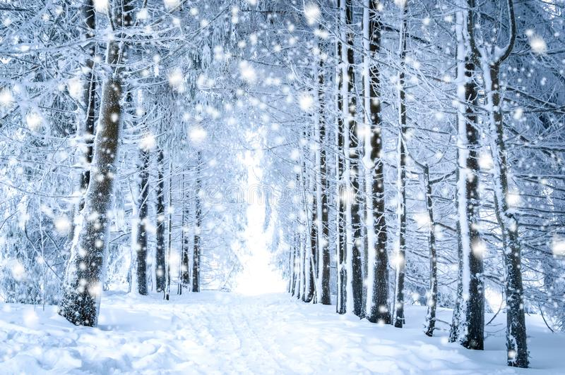 Magiskt vinterlandskap: bana i den snöig skogen med fallande snö royaltyfri bild